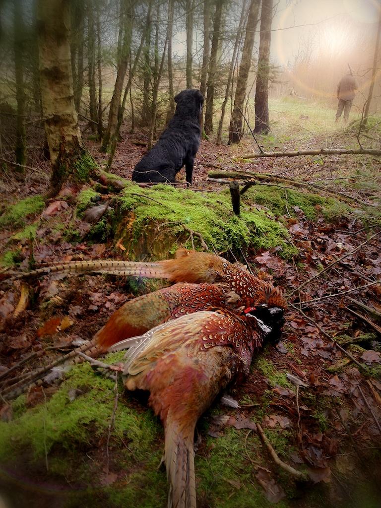 Buddy i sit rette element - på Jagt!