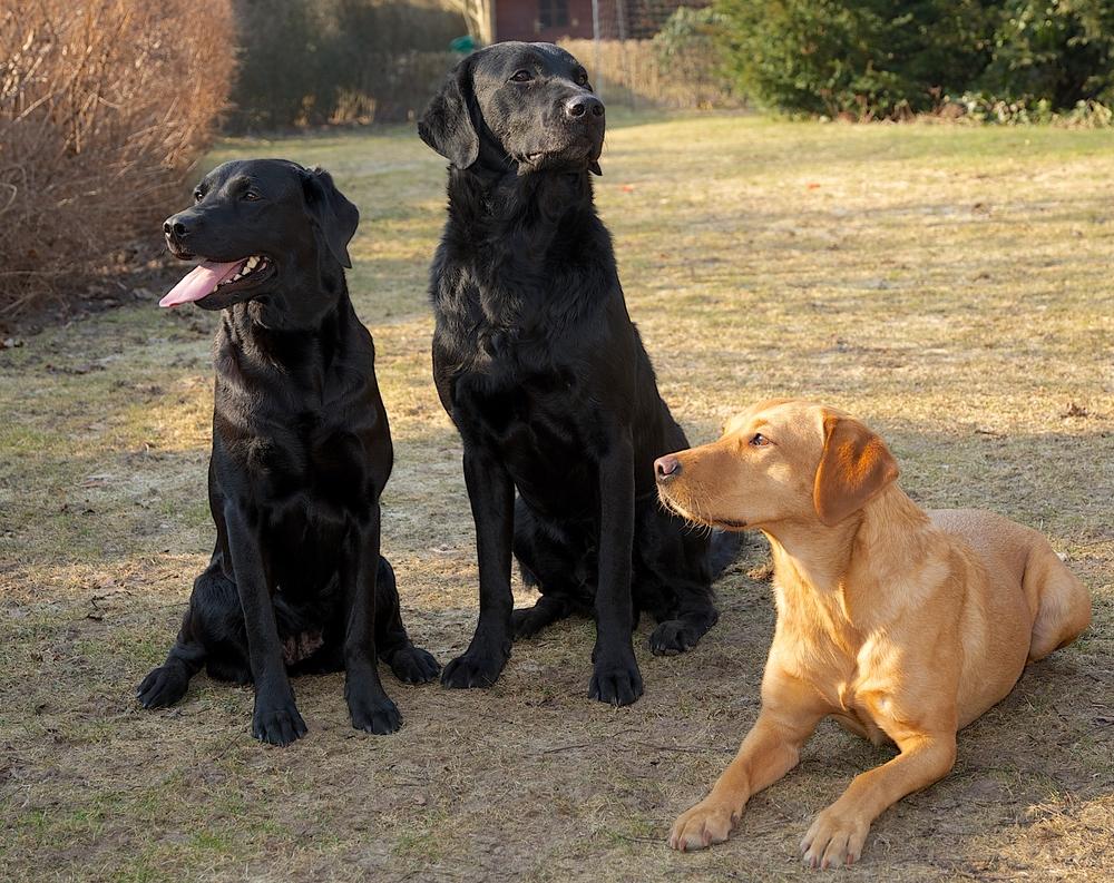 """Bella, Buddy og deres """"kusine"""""""