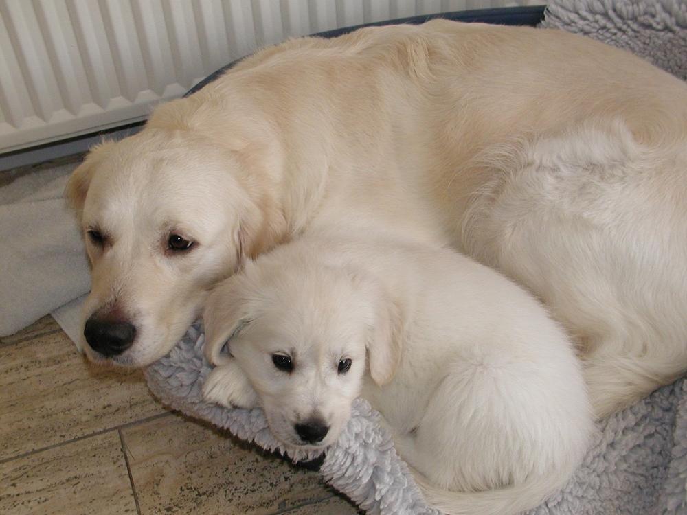 Freja og Odin. Freja har skulle lægge kurv til alle vores hunde gennem tiderne :-)