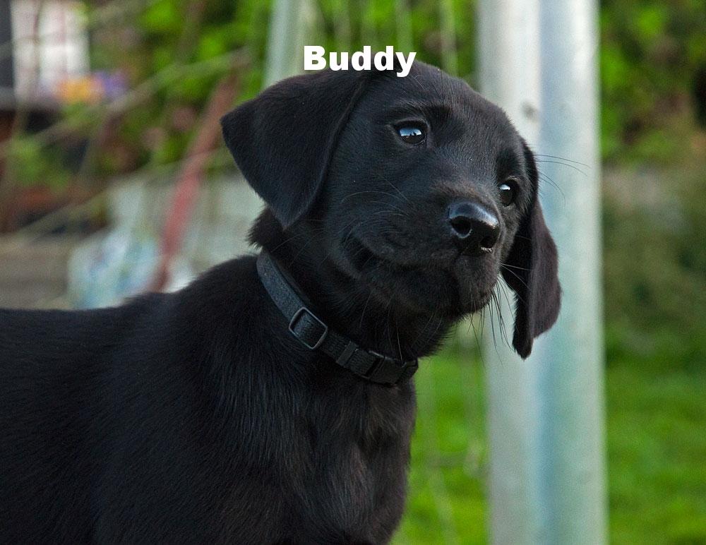Buddy-8.jpg