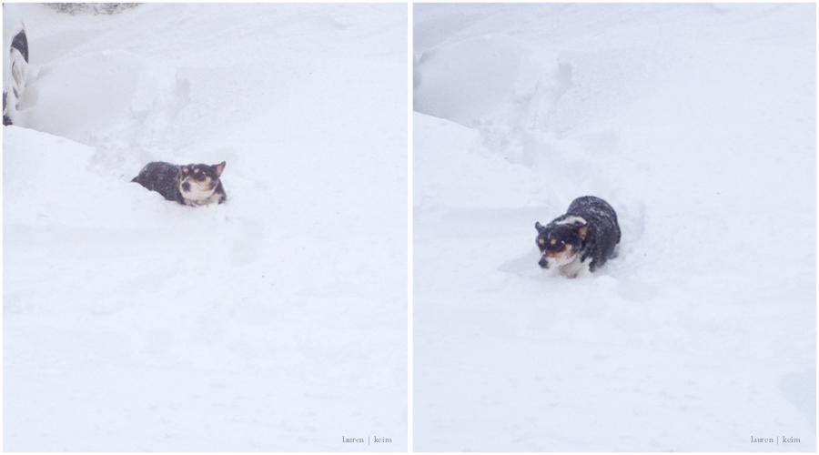 snow corgi.jpg