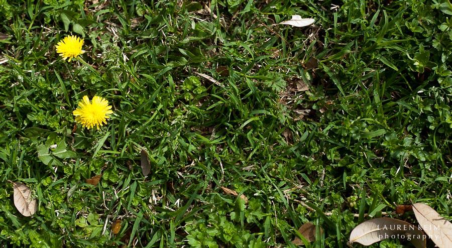 0312_spring garden7.jpg