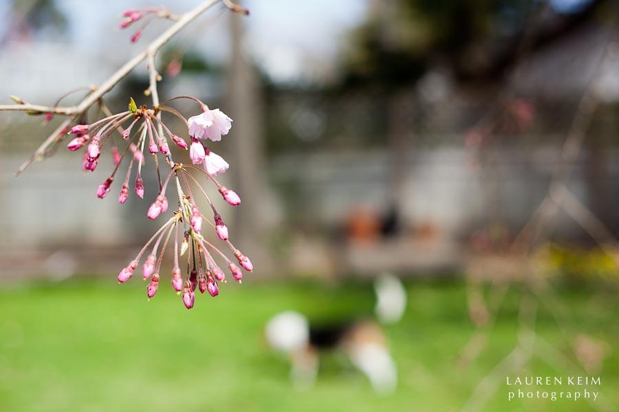 0312_spring garden9.jpg