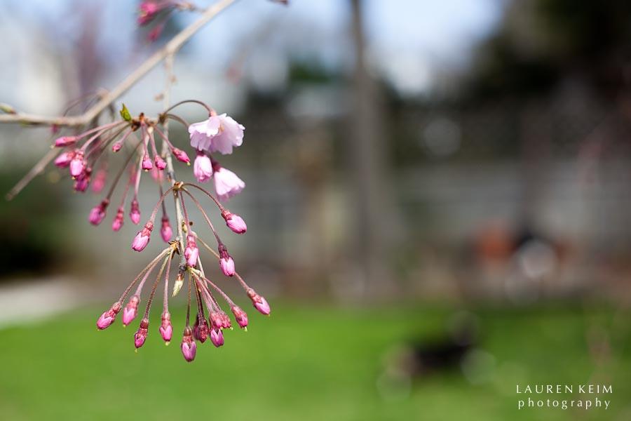 0312_spring garden8.jpg