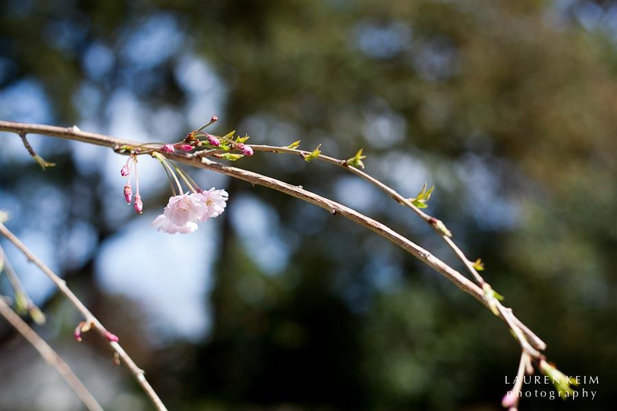 0312_spring garden11.jpg