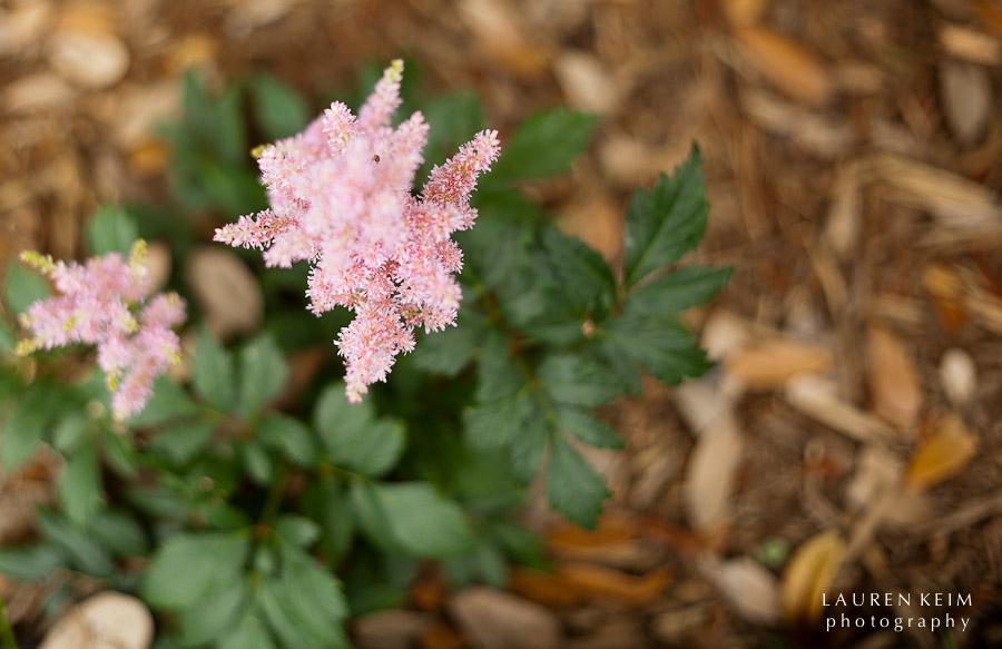 0512_Neels_Garden1.jpg