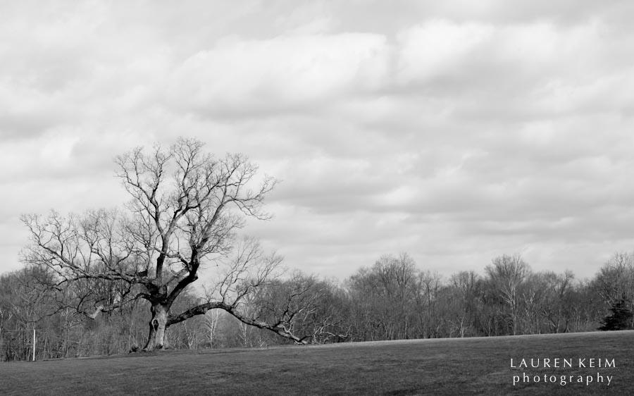 davids_tree-5.jpg