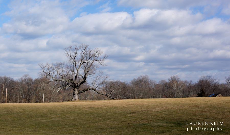 davids_tree-3.jpg