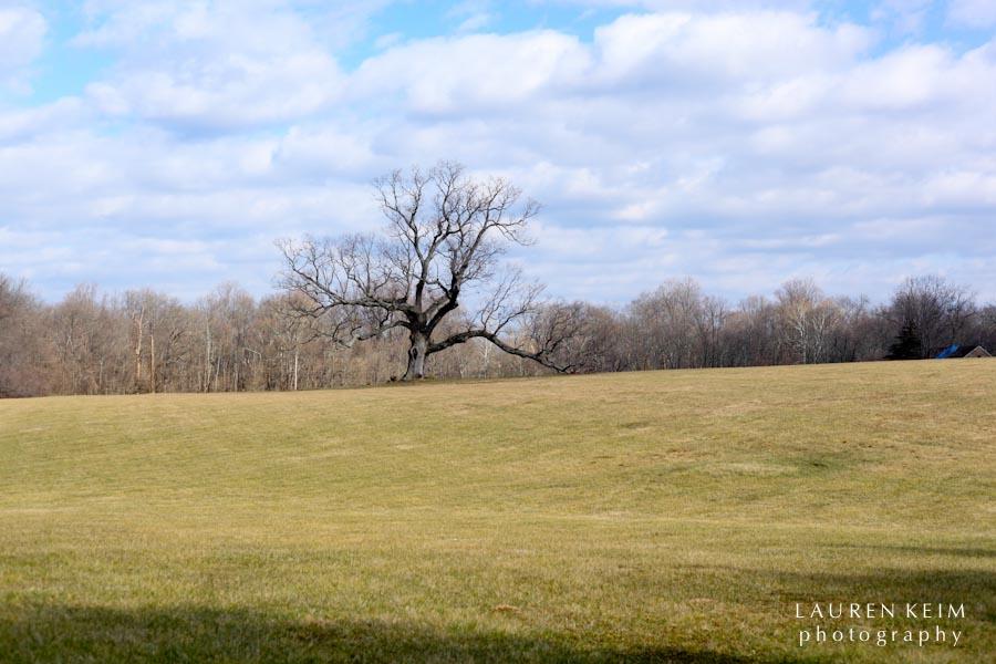 davids_tree-1.jpg