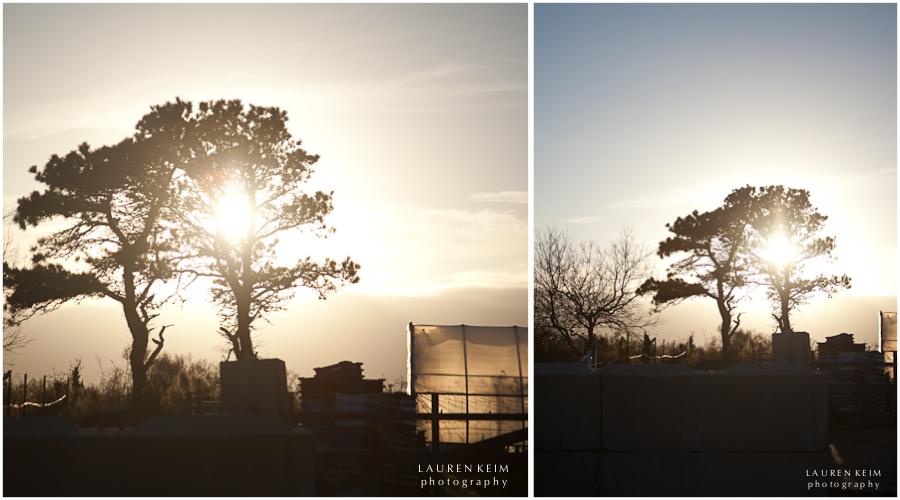 cisco tree.jpg