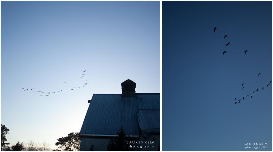 bird sky.jpg