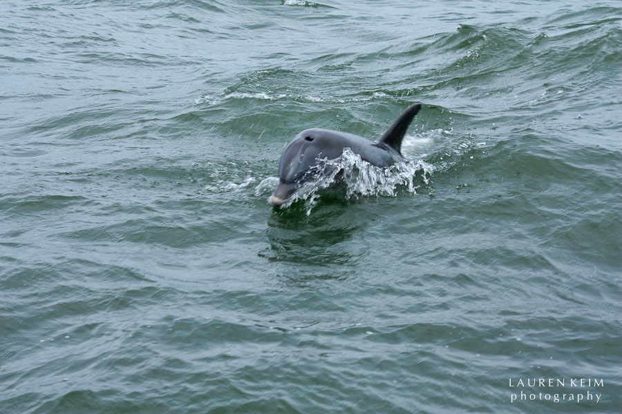 flipper-7.jpg