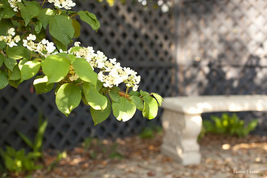 April Garden.jpg