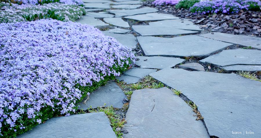 spring garden-7.jpg