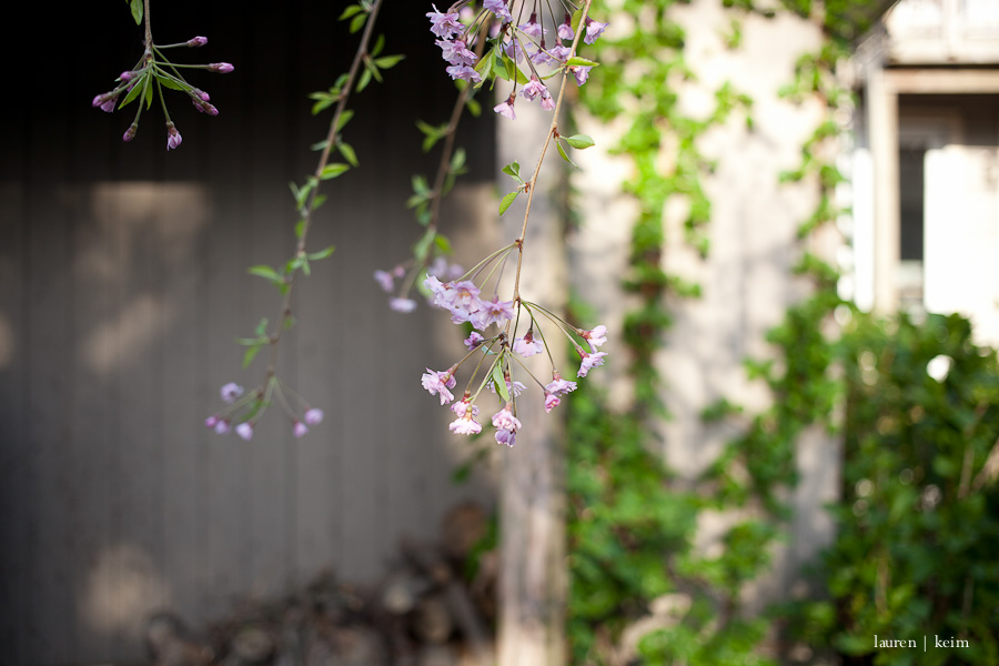 spring garden-1.jpg