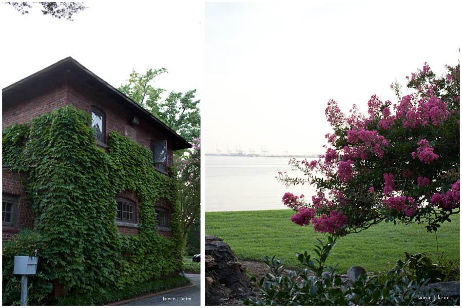 herm_house_tree.jpg