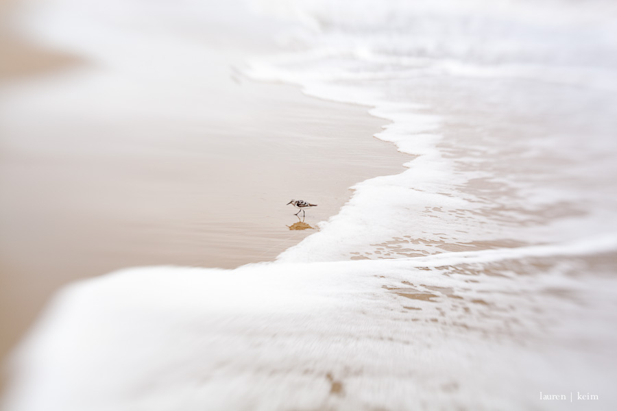 sandpiper.jpg