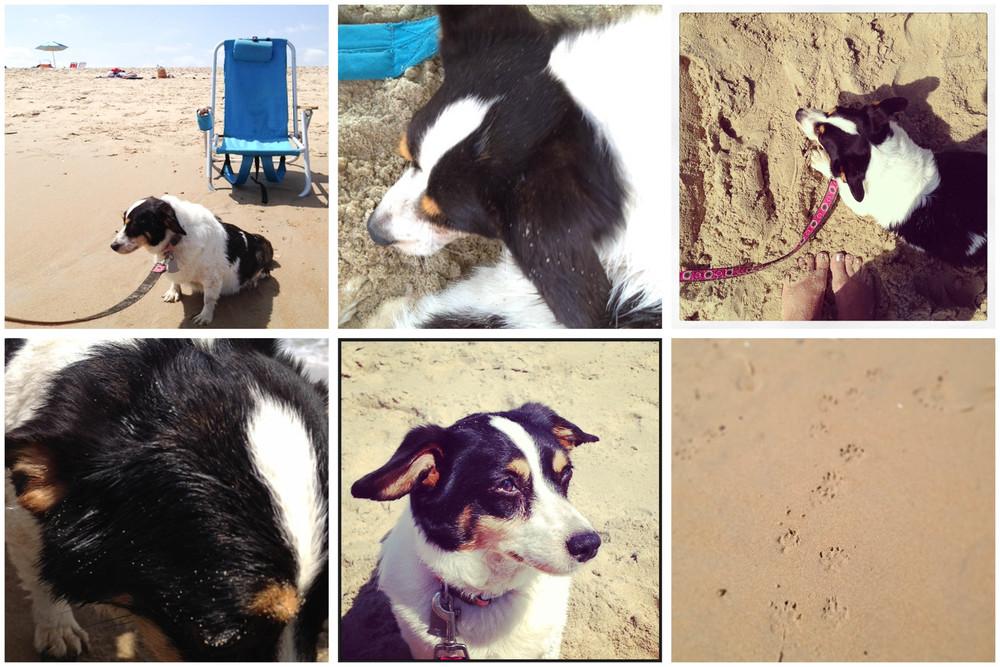 Vi_collage.jpg