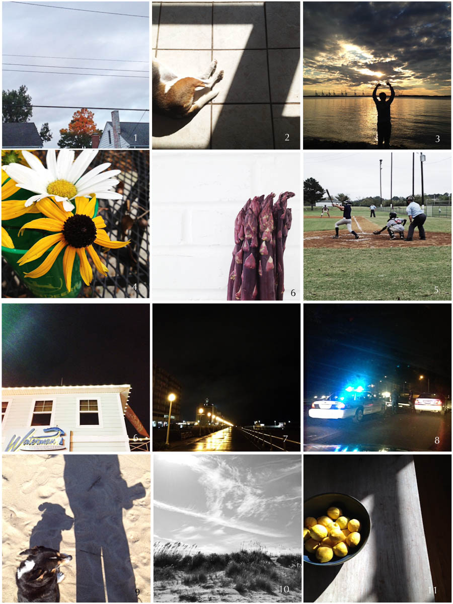 1. autumn sunrise | 2. studio hound | 3. silhouette | 4. fall bouquet | 5. studio work | 6. fall ball | 7. local hangout | 8. nighttime walk | 9. Emergency! | 10. surprise selfie | 11. bay day | 12. sunday sunshine