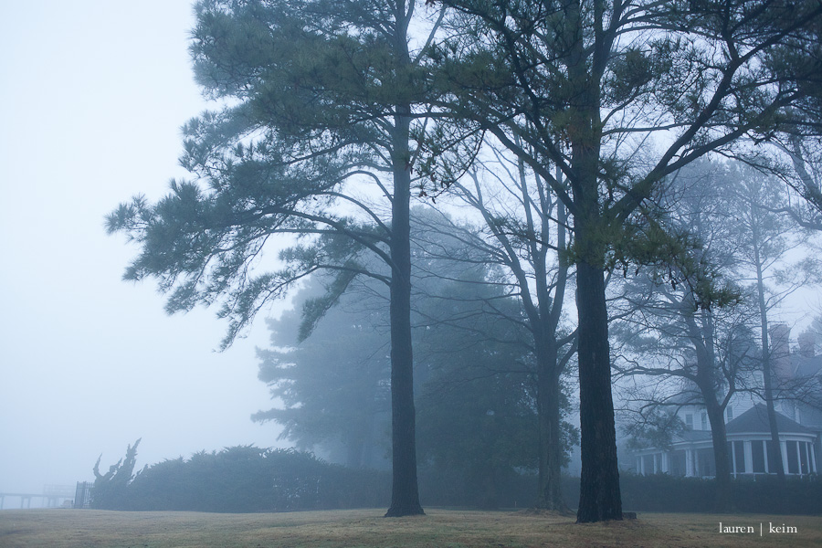 fog-7.jpg