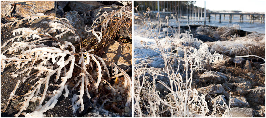 frozen branches.jpg