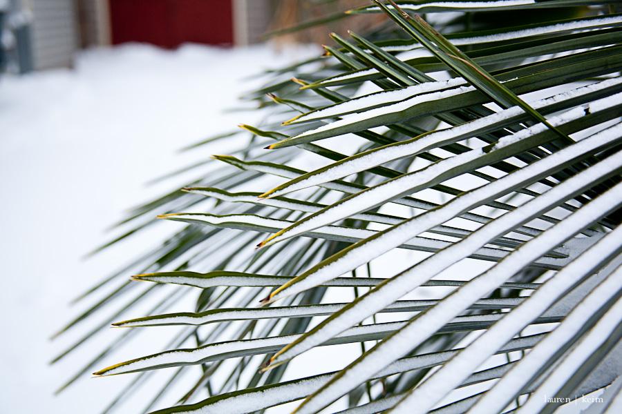 snow2-10.jpg