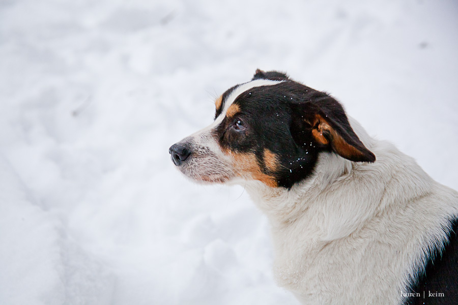 snow_hounds-87.jpg