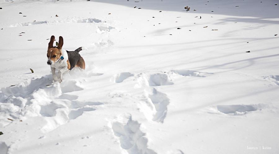 snow_hounds-88.jpg