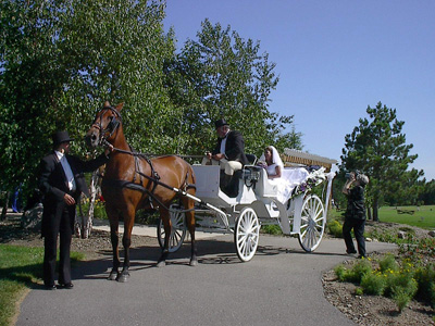 Horse drawn carriage rides for weddings at Breezy Point Resort.