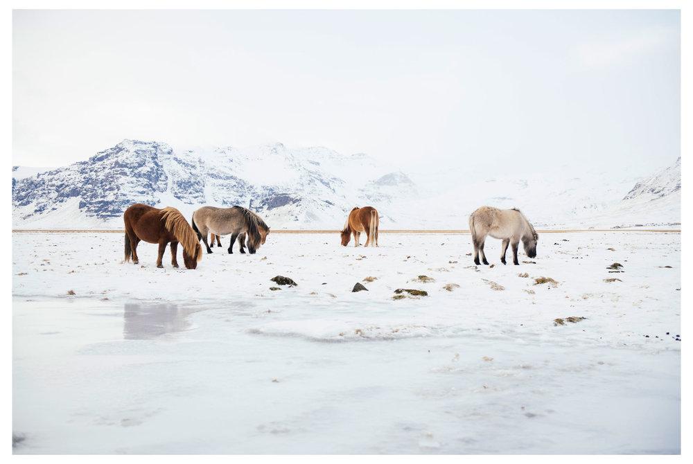 Icelandweb001.jpg