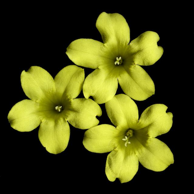 Flower_II.jpg