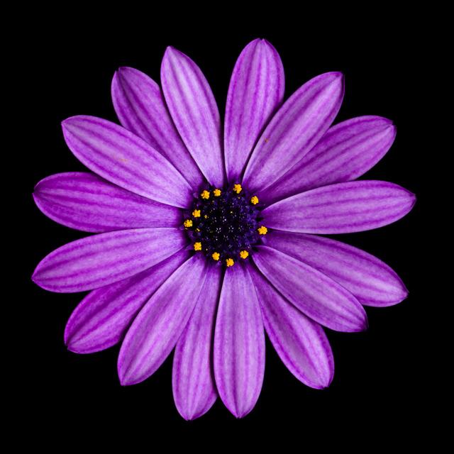 Flower_I.jpg