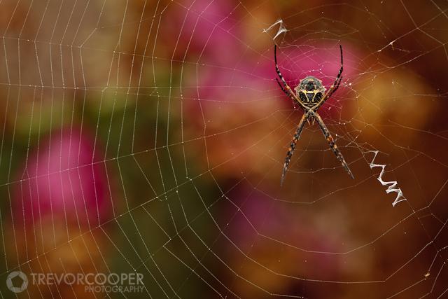 San Elijo Lagoon Spider