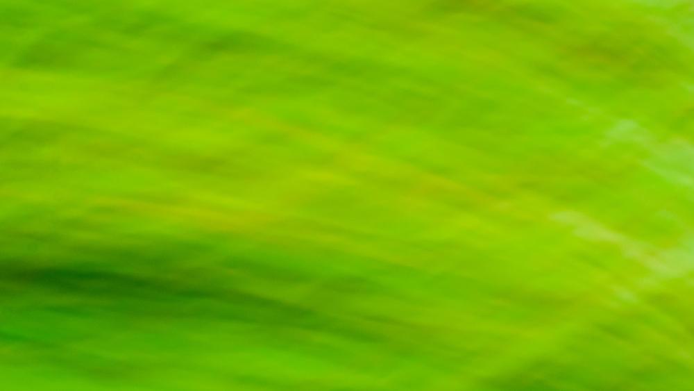 """""""Green, Green, Grass"""""""