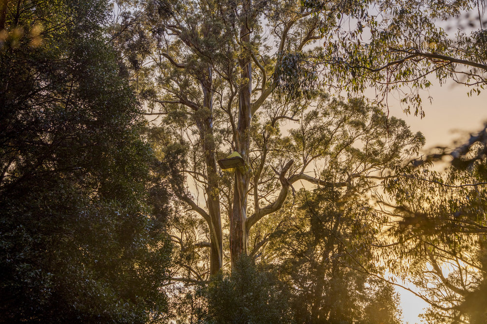 SPPhoto-WEB-_5D40165-Edit.jpg