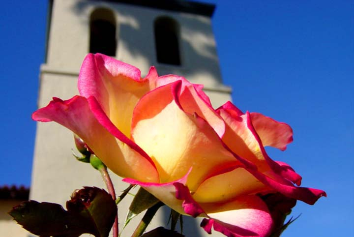 019 - Church Flower.jpg