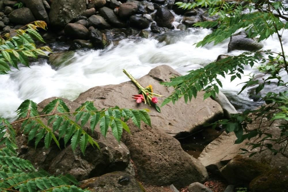 nature 29.JPG