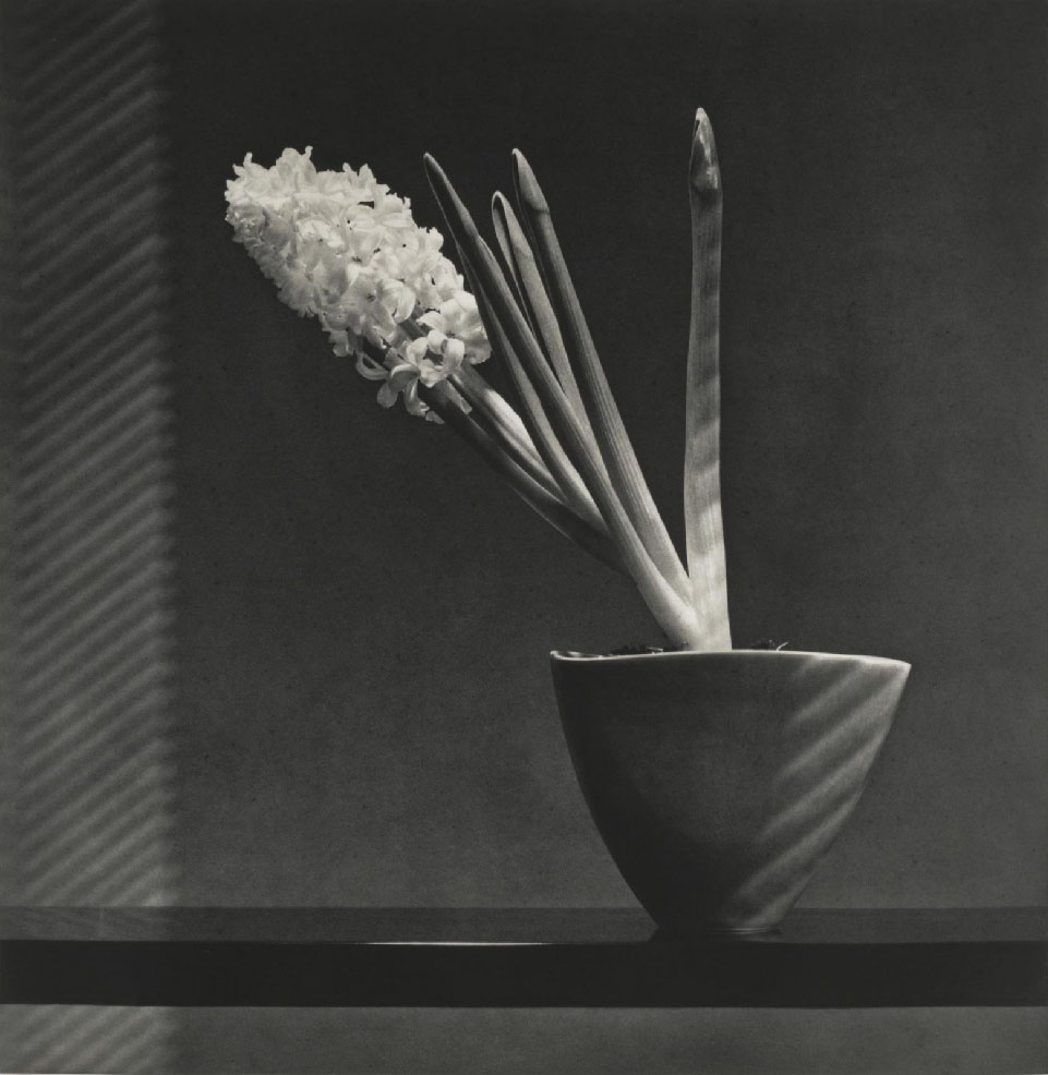 Hyacinth, 1987, by Robert Mapplethorpe
