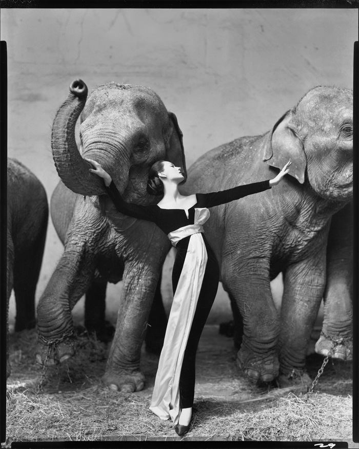 Photo: Lot 601, Sale 2431 at Christie's, Dovima with Elephants, by Richard Avedon.