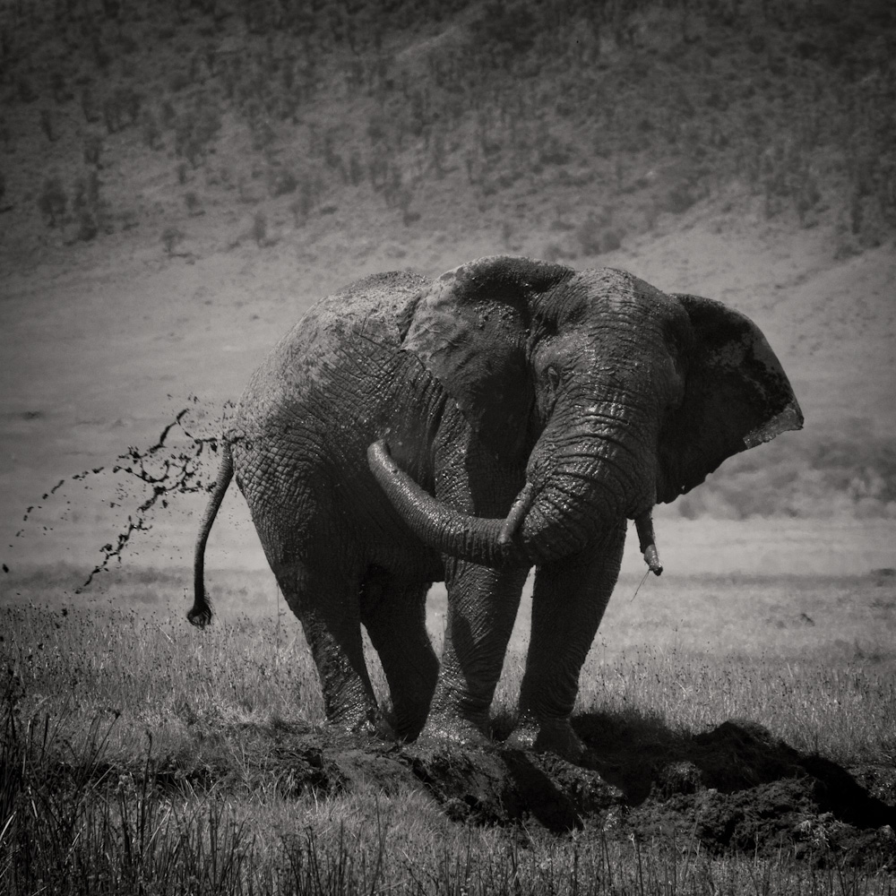 Photo: Elephant, Ngorongoro conservation area (Tanzania), by Barend Jan de Jong (Canon 5D mkII, Canon EF 100-400mm f/4.5-5.6 L IS USM).
