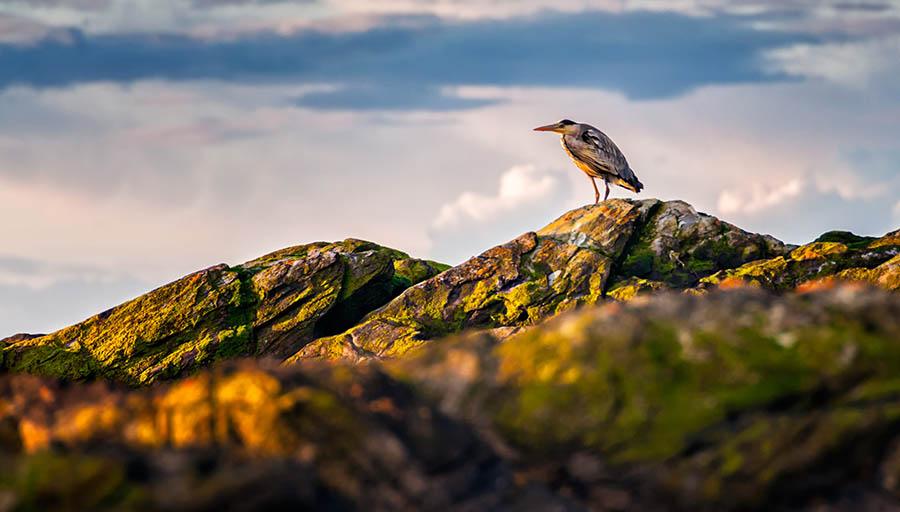 194/366 •The Heron