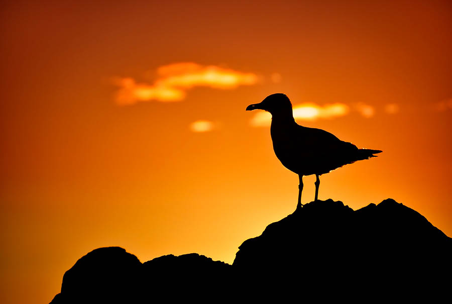 192/366 • The Sunset Seagull