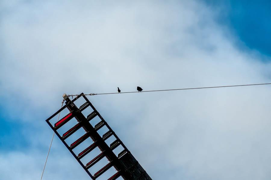 175/366 ● Windmill Birds