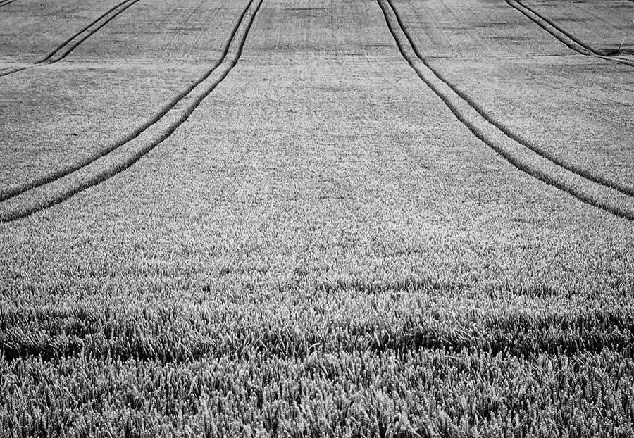 205/366 • Lines In A Field
