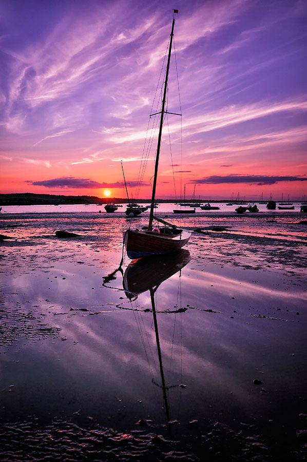 245/366 • Purple Reflections