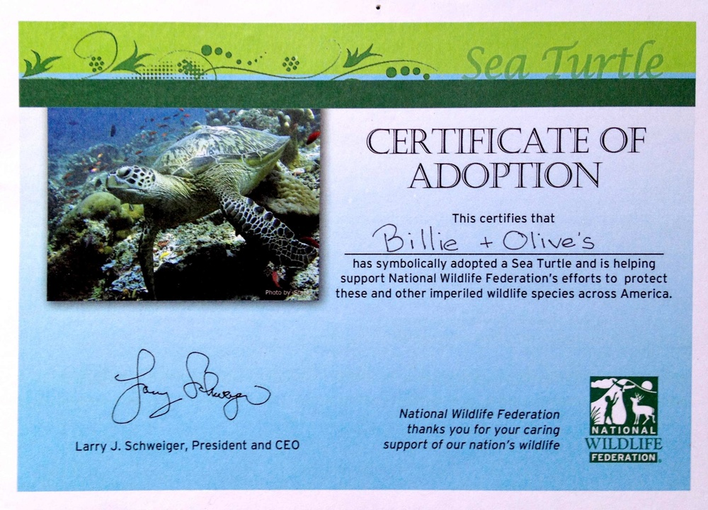 2013 Green Sea Turtle Adoption Certificate