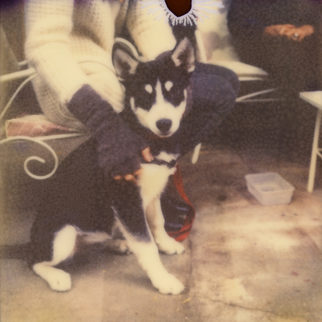 px680_puppy.jpg