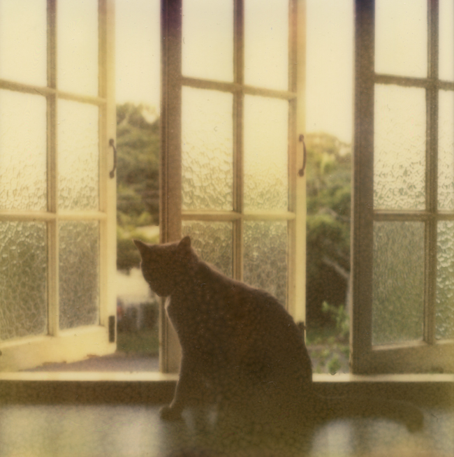px680_lucy.jpg