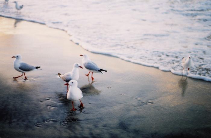gullsWEB.jpg