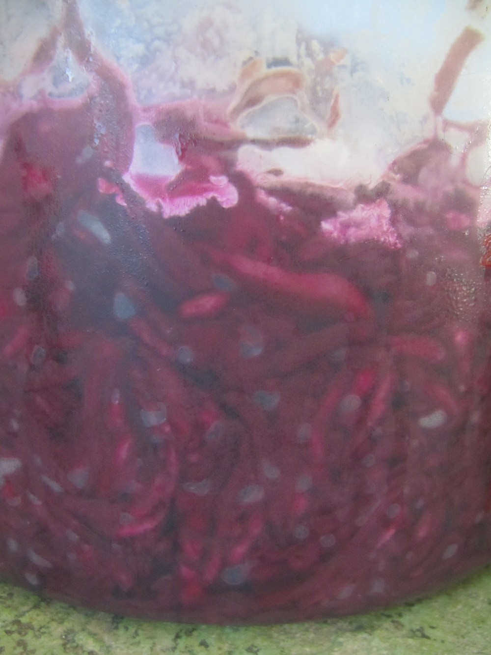 mold and yeast on beet kraut